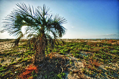 Beach Palm Morning Print by Michael Thomas