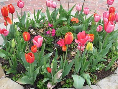 Beautiful Circle Of Tulips Print by Shawn Hughes
