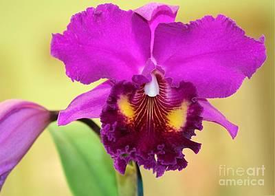 Beautiful Hot Pink Orchid Print by Sabrina L Ryan