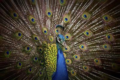 Pheasant Digital Art - Beautiful Peacock  by Anek Suwannaphoom