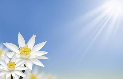 Beautiful White Lotus Flower  Print by Natthawut Punyosaeng