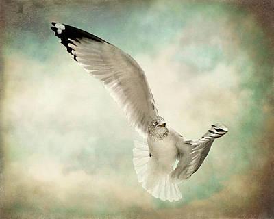 Beauty Of Flight Print by Jody Trappe Photography