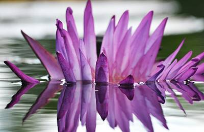 Waterlilies Photograph - Beauty Within by Melanie Moraga