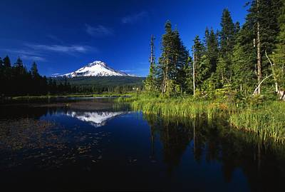 Beaver Dam In Pond, Reflection Of Mount Print by Natural Selection Craig Tuttle