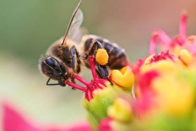 Bee At Work Print by Ralf Kaiser