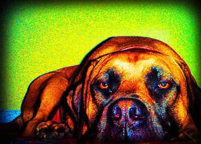 Dog Photograph - Beefy Girl In Bright Colors by Kelly Hazel