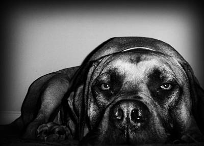 Dog Photograph - Beefy Girl by Kelly Hazel