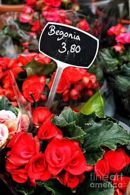 Leda Photograph - Begonia by Leslie Leda