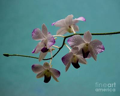 Raindrops On Orchids Photograph - Bejeweled With Raindrops by Theresa Willingham