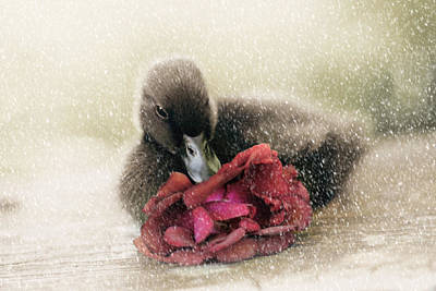 Duckling Photograph - Bella In The Snow by Amy Tyler