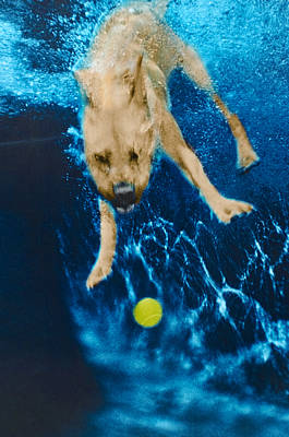 Diving Dog Photograph - Belly Flop by Jill Reger