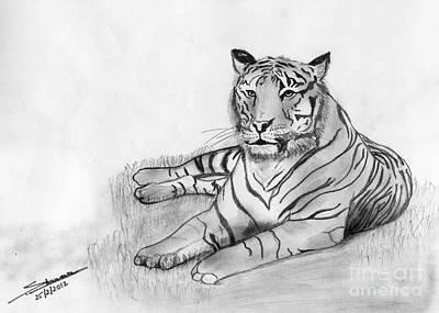 Shashi Kumar Drawing - Bengal Tiger by Shashi Kumar