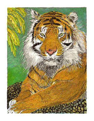 Bengal Tiger With Green Eyes Print by Jack Pumphrey