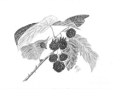 Raspberry Drawing - Berries by DebiJeen Pencils