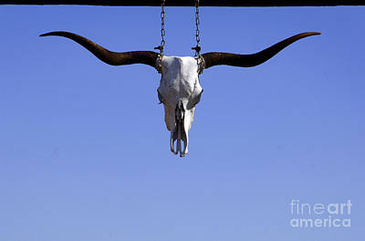 Americana Photograph - Bevo by Gib Martinez