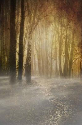 Beware Misty Woodland Path Print by Meirion Matthias