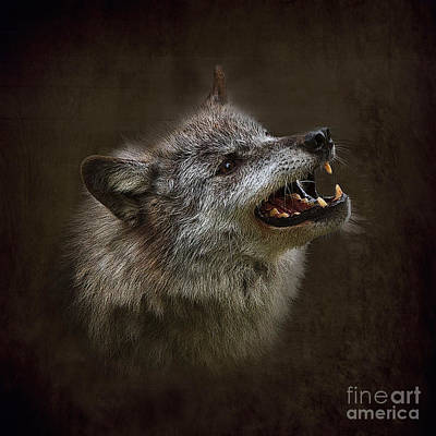 Big Bad Wolf Print by Louise Heusinkveld