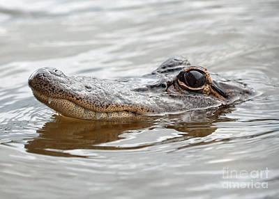 Big Eyes Baby Gator Print by Carol Groenen
