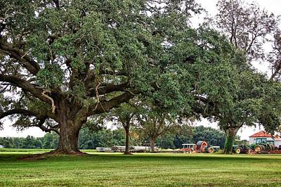 Big Oak And The Tractors Print by Michael Thomas