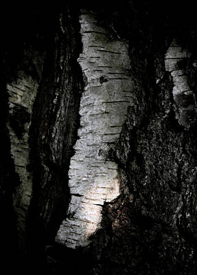 Birch Bark Photograph - Birch Abstraction by Odd Jeppesen