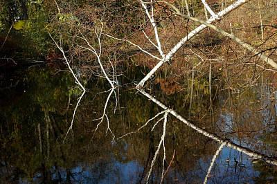 Walking Photograph - Birch Lake Reflections by LeeAnn McLaneGoetz McLaneGoetzStudioLLCcom