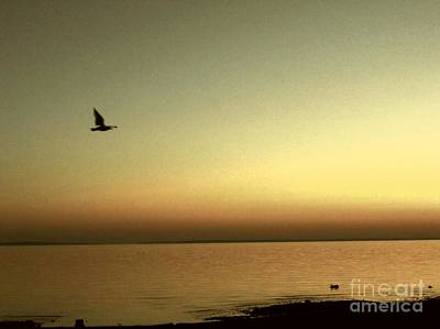 Bird At Sunrise - Sepia Print by Desiree Paquette