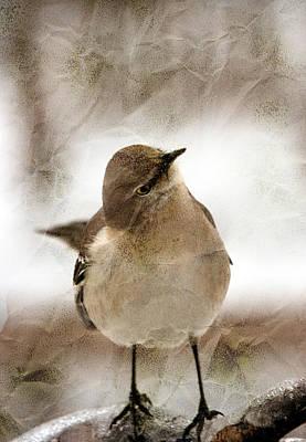 Bird In A Bag Print by Skip Willits