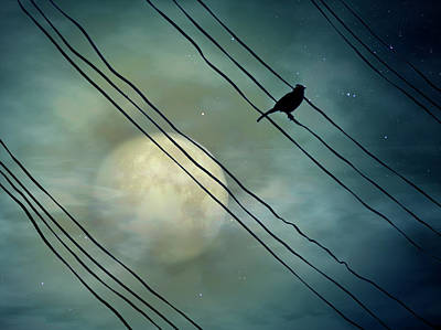 In A Row Photograph - Bird In Moonlight by Digital Art - Surrealism