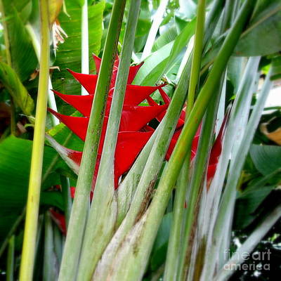Leaves Photograph - Bird Of Paradise by Tanya  Searcy