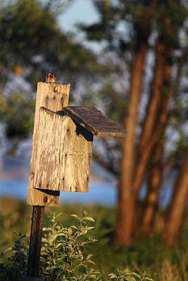 Swallow Photograph - Birdhouse 23 by Andrew Pacheco
