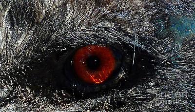 Emu Digital Art - Bird's Eye by Methune Hively