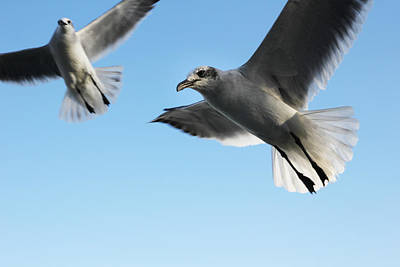 Birds In Motion. Original by Giancarlo Sherman
