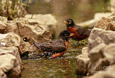 Birds Of A Feather Swim Together Print by Inspired Nature Photography Fine Art Photography