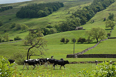 Bishopdale In The Yorkshire Dales National Park Print by Louise Heusinkveld