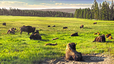 Bison Herd In Yellowstone Print by Gregory Dyer