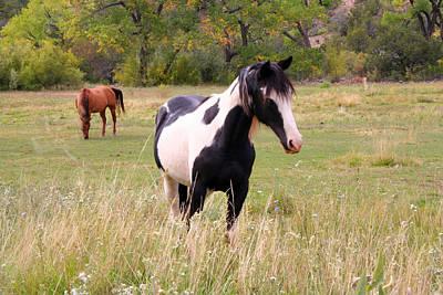 Black And White Horse Print by Joe Myeress