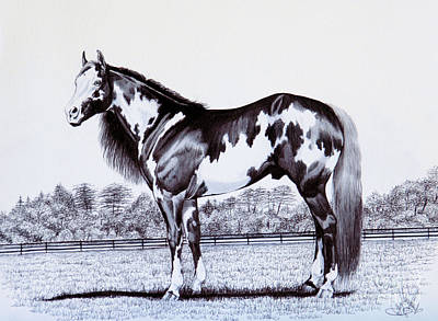 Pinto Drawing - Black And White Overo Paint Horse by Cheryl Poland