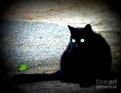 Black Cat Beauty Print by Lainie Wrightson