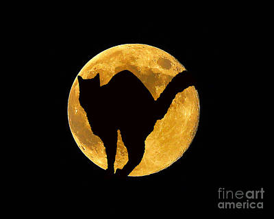 Black Cat Moon Print by Al Powell Photography USA