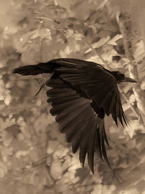 American Crow Photograph - Black Crow by DigiArt Diaries by Vicky B Fuller