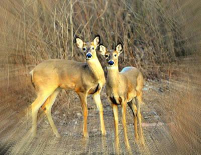 Black Ear Deer Print by Marty Koch