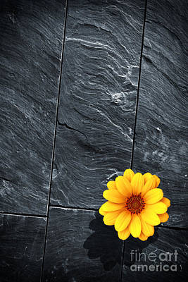 Black Schist Flower Print by Carlos Caetano