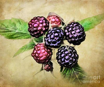Digital Photograph - Blackberries Portrait by Susan Isakson