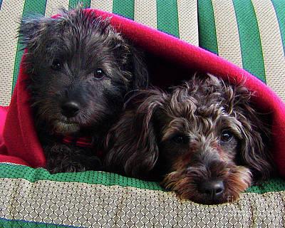 Puppies Digital Art - Blanket Buddies by Terril Heilman