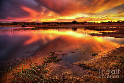 Glare Photograph - Blazing Sky by Carlos Caetano