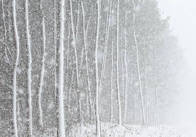 Blizzard Blankets Trees In Snow Print by Douglas MacDonald