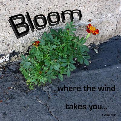 Bloom Where The Wind Takes You Print by J R Baldini