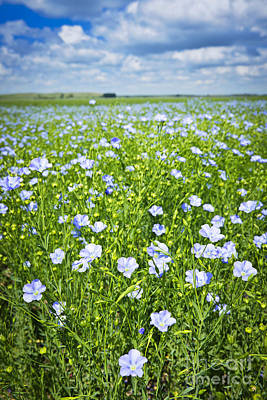 Blossom Photograph - Blooming Flax Field by Elena Elisseeva
