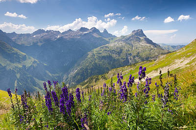 Y120907 Photograph - Blooming Monkshood In Front Of The Allgauer Alps by Ingmar Wesemann