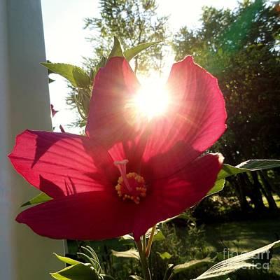 Blooming Sun Print by Elizabeth Hernandez